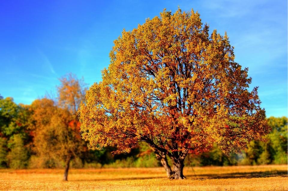 Doğa'dan Muhteşem Manzaralar 9