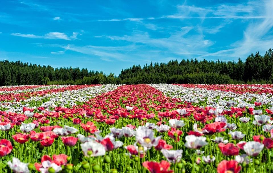 Doğa'dan Muhteşem Gün Batımı Kareleri 20