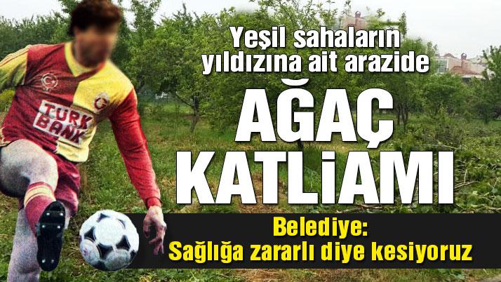 Efsane Milli futbolcu Tanju Çolak'a ait Arazide Ağaç Katliamı.