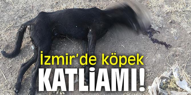 İzmir'de köpek katliamı!