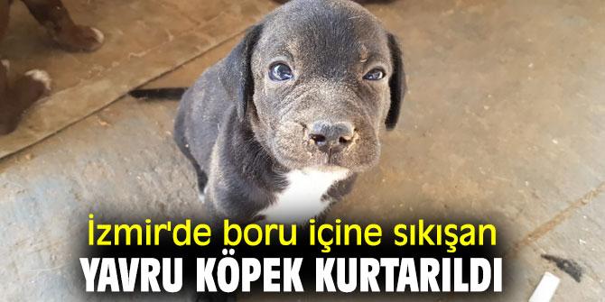 İzmir'de boru içine sıkışan yavru köpek kurtarıldı