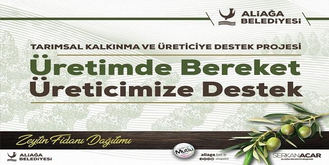 Aliağa Belediyesi'nin Zeytin Fidanı Dağıtımları Sürüyor.