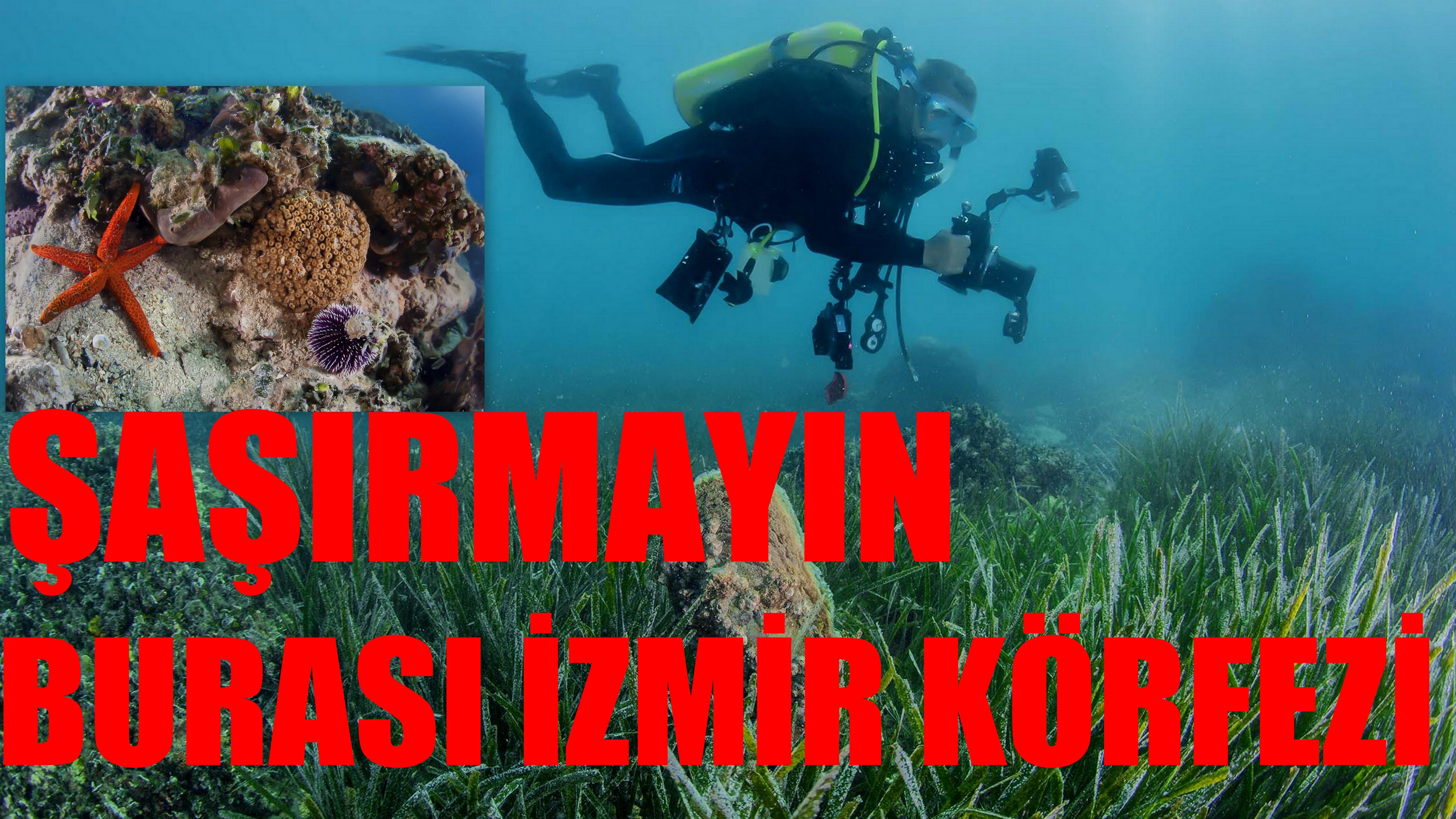 Şaşırmayın! Burası İzmir Körfezi