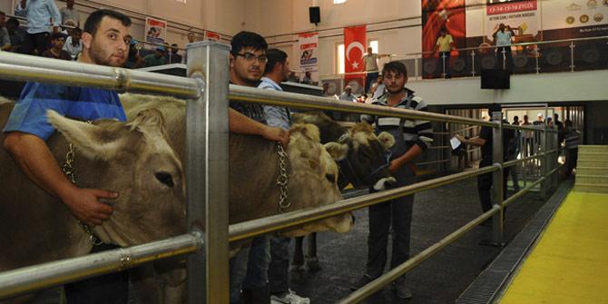 Hayvancılık fuarı Afyon'da start aldı
