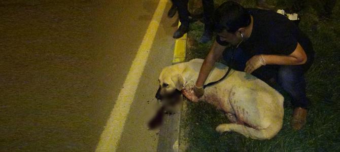 Vicdansızlar! Köpekleri silahla vurdular