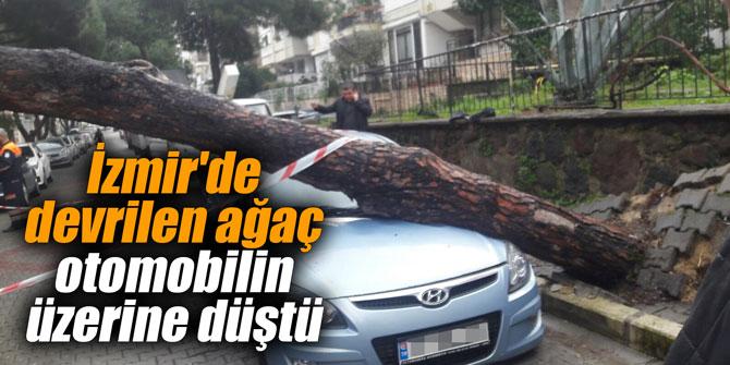 İzmir'de devrilen ağaç otomobilin üzerine düştü