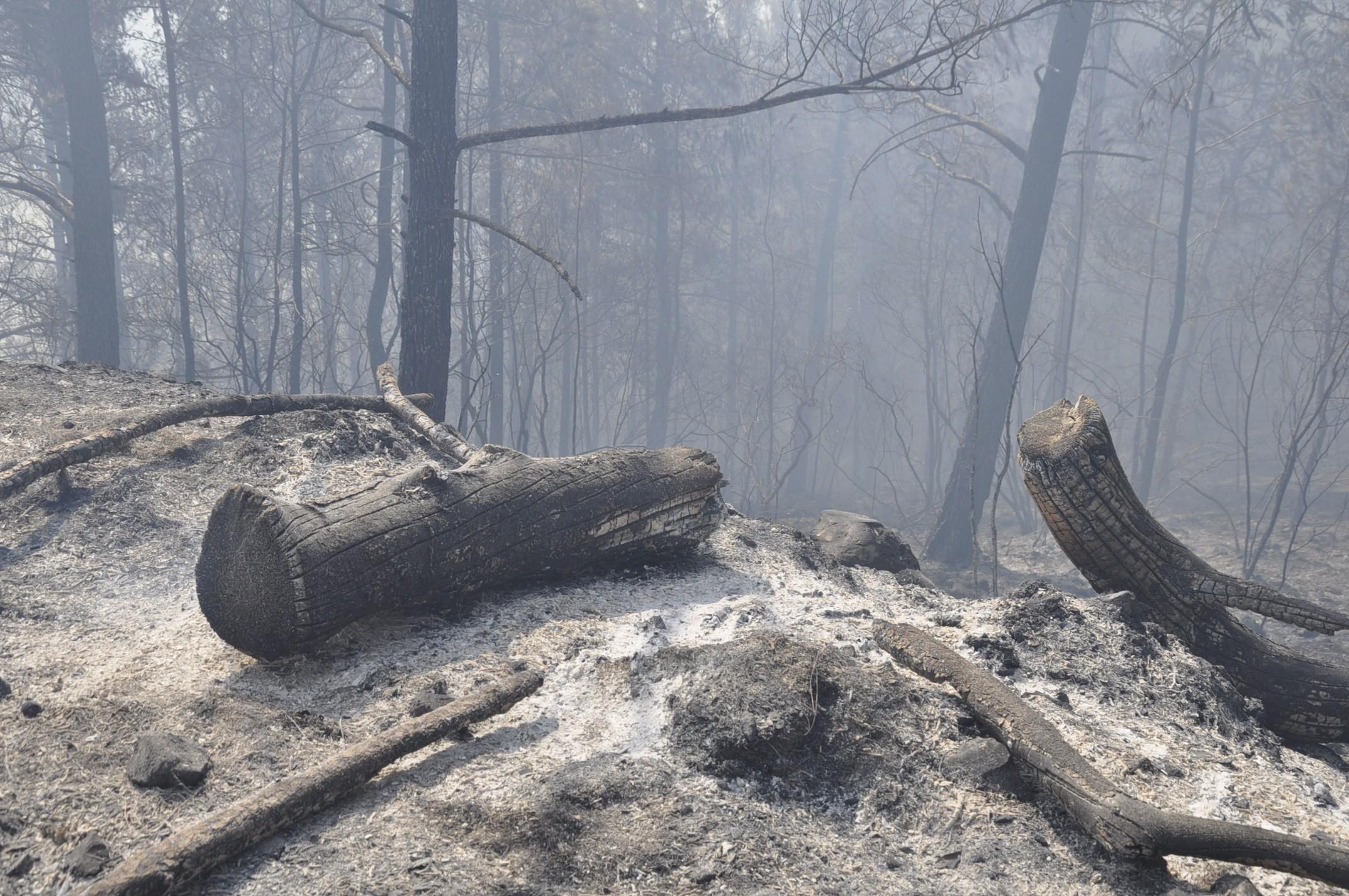 Hatay'da orman yangını devam ediyor...
