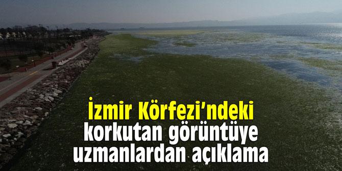 İzmir Körfezi'ndeki korkutan görüntüye uzmanlardan açıklama