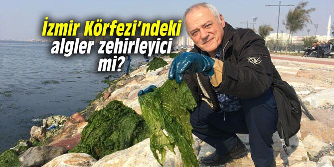 İzmir Körfezi'ndeki algler zehirleyici mi?