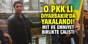 O PKK'lı Diyarbakır'da yakalandı! MİT ve emniyet birlikte çalıştı