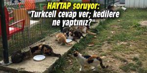 """HAYTAP soruyor: """"Turkcell cevap ver; kedilere ne yaptınız?"""""""