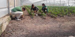 Foçalı öğrenciler Bio Enerji tesislerini gezdi