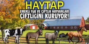 HAYTAP, Emekli yük ve çiftlik hayvanları çiftliğini kuruyor