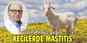 Keçilerde Mastitis