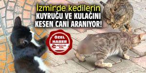 İzmir'de kedilerin kuyruğu ve kulağını kesen cani aranıyor!
