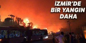 SON DAKİKA... Özdere'de Orman yangını