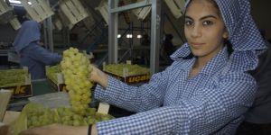 Sultani üzüm ihracatından 75 milyon dolar kazandık