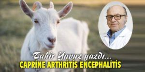 Caprine Arthritis Encephalitis