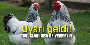"""Türk yumurtası için """"farklı sepet"""" arayışları hızlandı!"""