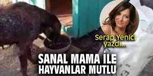 Sanal mama ile hayvanlar mutlu