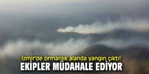 İzmir'de ormanlık alanda yangın çıktı! Ekipler müdahale ediyor