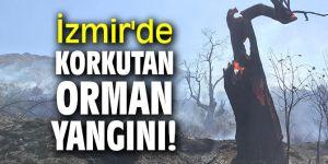 Son dakika! İzmir'de korkutan orman yangını!