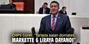 CHP'li Gürer, domates çiftçisinin sorunlarını dinledi!