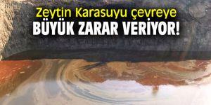 Zeytin Karasuyu çevreye büyük zarar veriyor!
