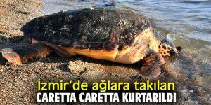 İzmir Körfezi'nde caretta caretta kurtarıldı