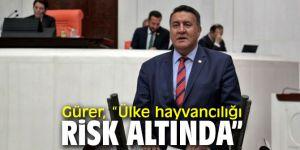 CHP'li Gürer, hayvancılığa dikkat çekti!