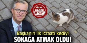 Başkanın ilk icraatı kediyi sokağa atmak oldu!