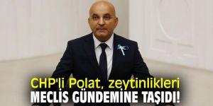 CHP'li Polat, zeytinlikleri Meclis gündemine taşıdı!
