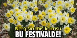 """Karaburun Belediyesi, """"3. Karaburun Nergis Festivali""""ne ev sahipliği yapacak!"""