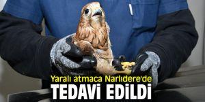 Narlıdere Belediyesi, yaralı atmacayı tedavi etti!