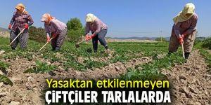 Yasaktan etkilenmeyen çiftçiler tarlalarda