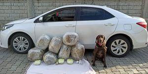 Uyuşturucu operasyonunda 62 kilo toz esrar ele geçirildi!