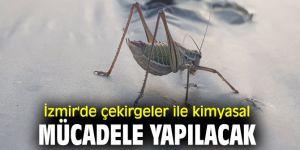 İzmir'de çekirgelerle kimyasal mücadele yapılacak