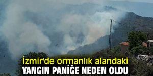 İzmir'de ormanlık alandaki yangın paniğe neden oldu