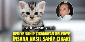 Kediye Sahip Çıkamayan Belediye İnsana Nasıl Sahip Çıkar!
