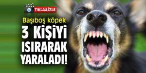 Başıboş köpek 3 kişiyi ısırarak yaraladı!