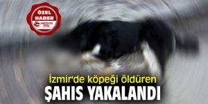 İzmir'de köpeği öldüren şahıs yakalandı