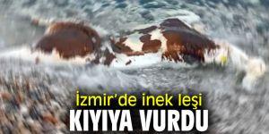İzmir'de inek leşi kıyıya vurdu