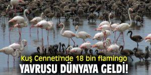 İzmir Kuş Cenneti'nde18 bin flamingo yavrusu dünyaya geldi!