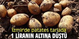 İzmir'de patates tarlada 1 liranın altına düştü
