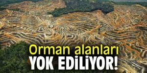 Orman alanları yok ediliyor!