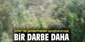 İzmir'de jandarmadan uyuşturucu operasyonu!