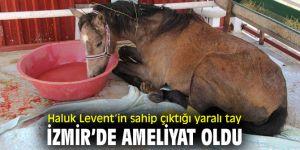 Ünlü sanatçı Haluk Levent'in sahip çıktığı yaralı tay, İzmir'de ameliyat oldu