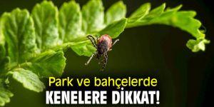 Uzmanı uyardı! Park ve bahçelerde kenelere dikkat!