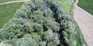 Nehirdeki adacık kenevir bahçesi yapılmış!