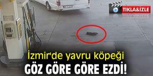 İzmir'de yavru köpeği göz göre göre ezdi!